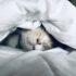 Kočka v posteli